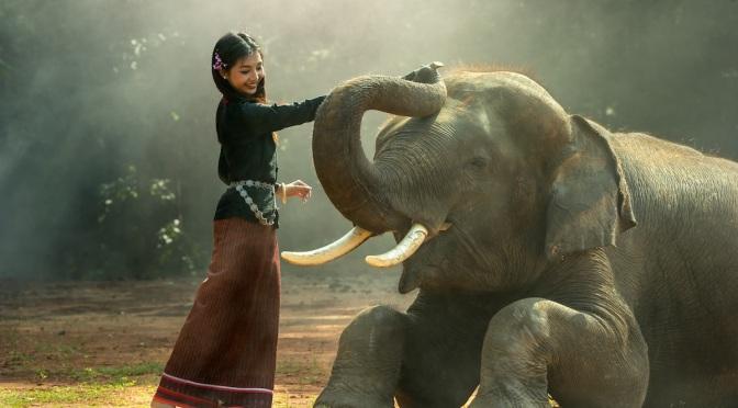 Elefanterne sover i t-shirts i Horsens